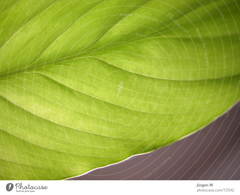 Grün 2 Blatt grün Natur Pflanze petal flower