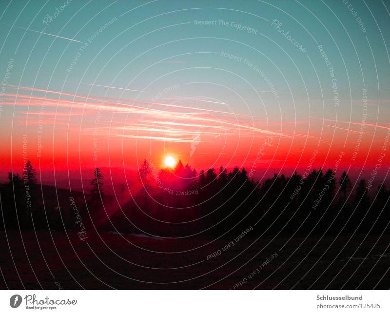 The Sun Sonne Natur Landschaft Himmel Horizont Sonnenaufgang Sonnenuntergang Sonnenlicht Nebel Baum Wald dunkel hell Wärme blau rot schwarz Kondensstreifen
