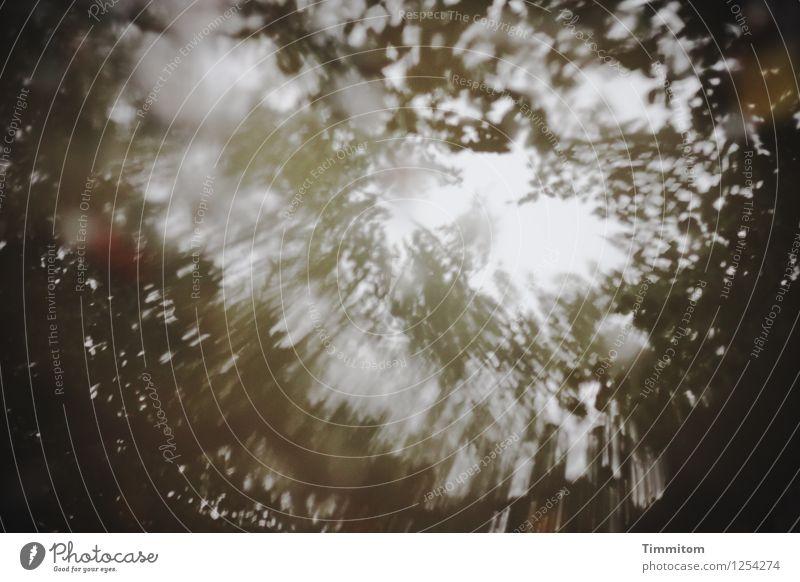 Traum| der nicht festzuhalten war. Himmel Natur Pflanze Wasser Blatt Wald Umwelt Gefühle natürlich ästhetisch Urelemente