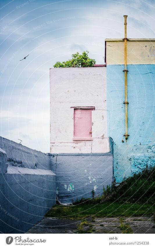 ncshtfbrdflng Natur Wolken Gras Stadtrand Bauwerk Gebäude Architektur Mauer Wand Vogel 1 Tier alt dreckig dunkel blau rosa Verfall Vergangenheit Möwe Röhren