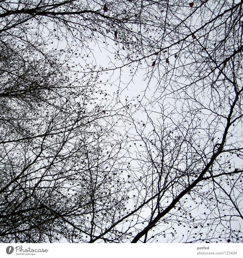 Vernetzung... Natur Himmel Baum schwarz oben grau Macht Spaziergang Netz Freizeit & Hobby Information Ast unten Baumkrone Wissen Zweig