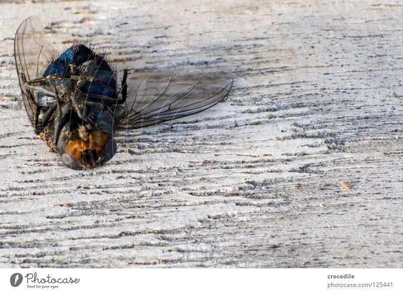 wenn fliegen nicht mehr fliegen.... :( Insekt abgestürzt Holz Makroaufnahme Trauer Verzweiflung Nahaufnahme Fliege Luftverkehr bruchpilot Tod Flügel