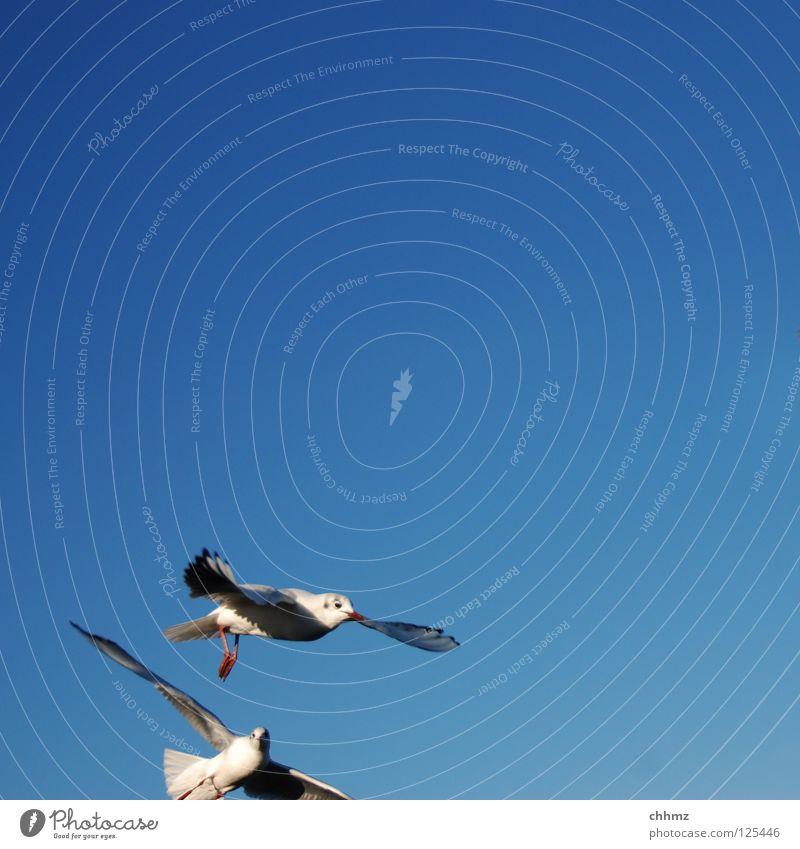 Komischer Anschnitt schön Meer Ferne See Vogel fliegen Geschwindigkeit ästhetisch Luftverkehr Fluss Segeln Möwe Schweben Anschnitt geschmackvoll