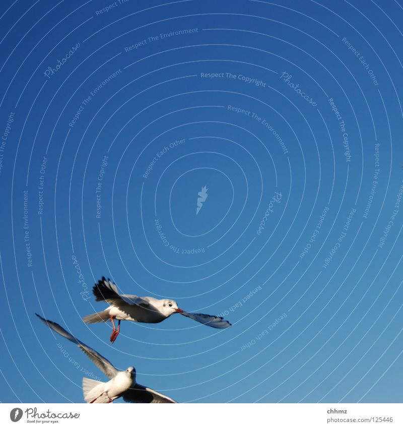 Komischer Anschnitt schön Meer Ferne See Vogel fliegen Geschwindigkeit ästhetisch Luftverkehr Fluss Segeln Möwe Schweben geschmackvoll
