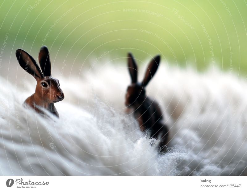 letzte Osterkartenmotivgelegenheit vor der Autobahn Tier Frühling Feld Ostern Jagd verstecken Hase & Kaninchen hüpfen Gruß Osterhase Osterei Jahreszeiten Känguruh