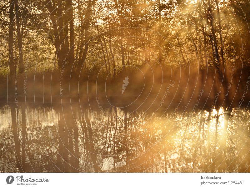 400 | Lieblingssonnenaufgangsweiher Natur Landschaft Wasser Sonne Herbst Schönes Wetter Baum Sträucher See Teich leuchten gold Stimmung Beginn Energie Hoffnung