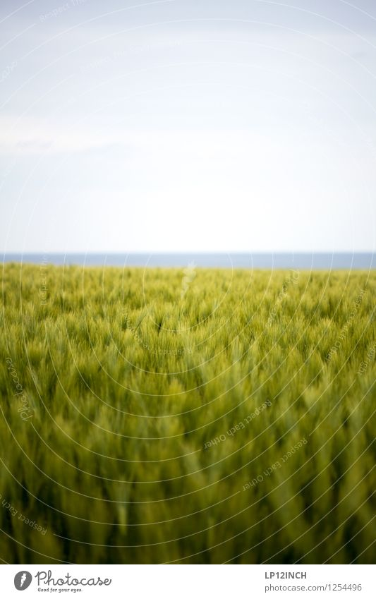 sWEED. I Wellness Ausflug Freiheit Meer Umwelt Natur Landschaft Tier Sommer Pflanze Gras Feld Küste Ostsee Bewegung Gesundheit Leichtigkeit rein Umweltschutz