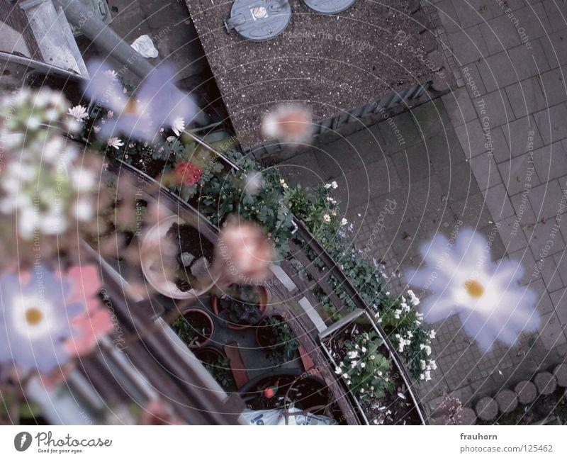 nachzügler Asphalt Beton Müllbehälter Blume Balkon Blüte violett Unschärfe Kräuter & Gewürze Schrebergarten Blumentopf Regenrinne trist Farblosigkeit dezent