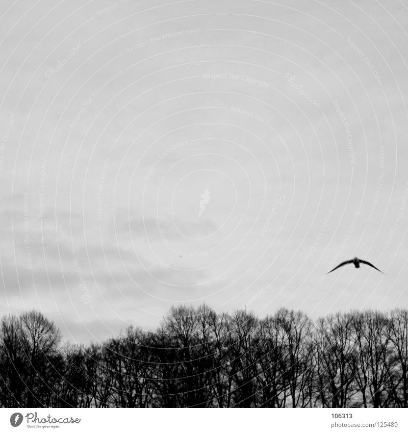 CUP OF SUNDAY Möwenvögel Tier Luft Ozon Schweben fahren flattern gleiten baumeln rein Unbeschwertheit Meer Wellen Symbole & Metaphern Wolken Baum Sträucher