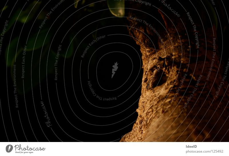 Auge der Natur Baum Bonsai Baumrinde dunkel braun grün gruselig Blatt Blätterdach schwarz Licht Holz Astloch Kruste Makroaufnahme Nahaufnahme Landschaft Loch