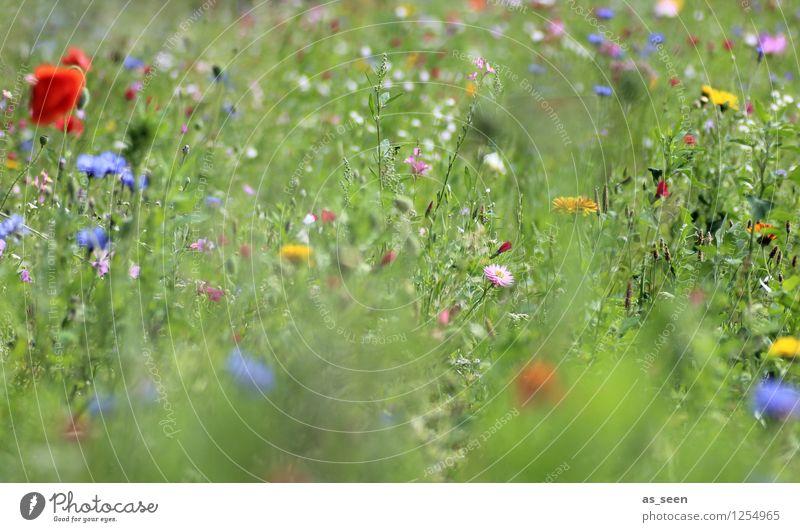 Sommerblumen Natur Ferien & Urlaub & Reisen Pflanze grün Farbe Blume rot Landschaft Umwelt Leben Blüte Wiese Garten Lifestyle Tourismus