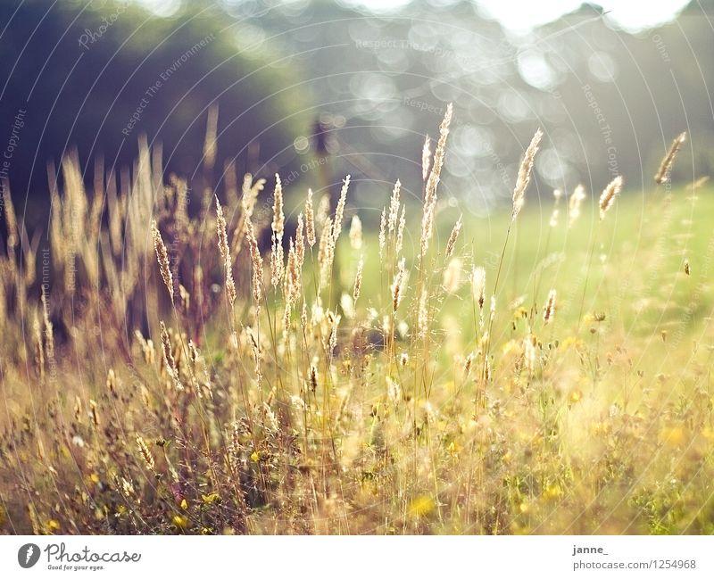 Wiese Natur Ferien & Urlaub & Reisen Pflanze ruhig Umwelt gelb Wärme Wiese Gras natürlich Europa Warmherzigkeit Frankreich Bretagne manuell Wetzlar