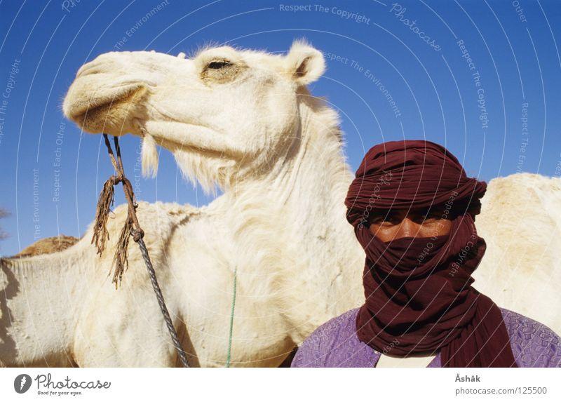 Tuareg Mann weiß Afrika Wüste Mensch Tier Stolz Kamel Sahara Turban Nomaden Niger