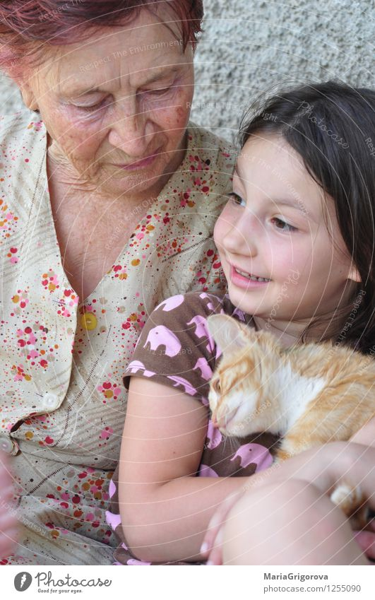 Urgroßmutter, Enkelkind, Kätzchen Katze Mensch Frau Kind Sommer Freude Tier Haus Mädchen Erwachsene Leben Liebe Senior Familie & Verwandtschaft Lifestyle Kopf