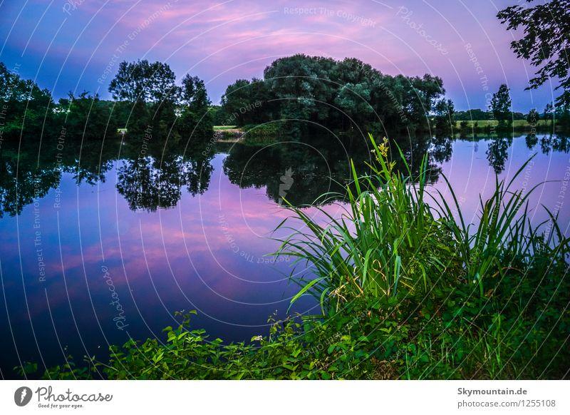 At night Natur blau Pflanze grün Sommer Wasser Blume Landschaft Wald Umwelt Wärme Wiese Gras See rosa Wetter