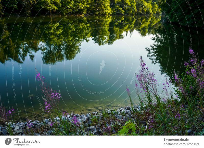 Am Ufer Umwelt Natur Landschaft Pflanze Tier Frühling Sommer Klima Klimawandel Wetter Schönes Wetter Baum Blume Gras Sträucher Moos Garten Park Wiese Wald