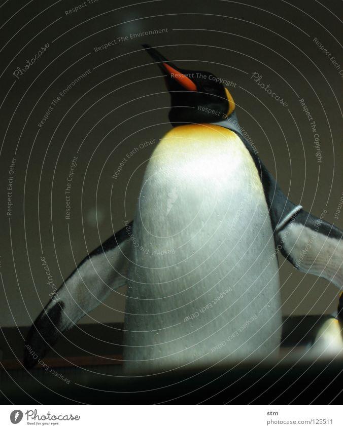 ... moment ... Pinguin Königspinguine Zoo Spielen Tier kommen nähern spritzen Tiergarten Würde mehrfarbig Freude Antarktis schön Wasser penguin Arme