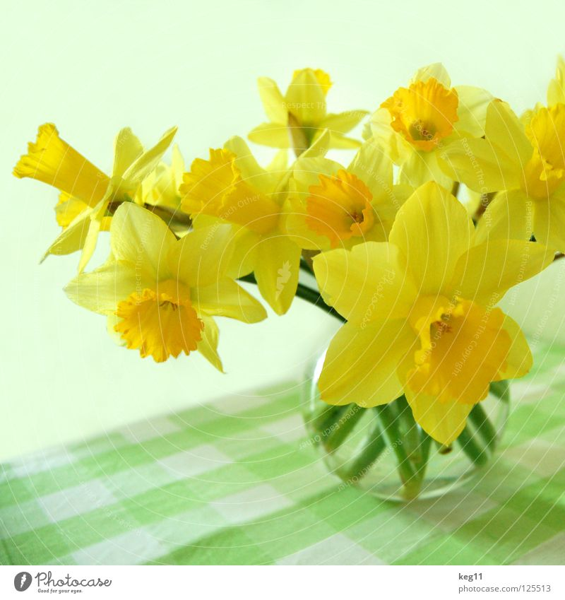 Frühlingsnarzissen Narzissen Blume Vase Tisch Blumenstrauß Gänseblümchen Gelbe Narzisse Glocke Hyazinthe Tulpe Osterei Feste & Feiern Stengel Kugelvase Decke