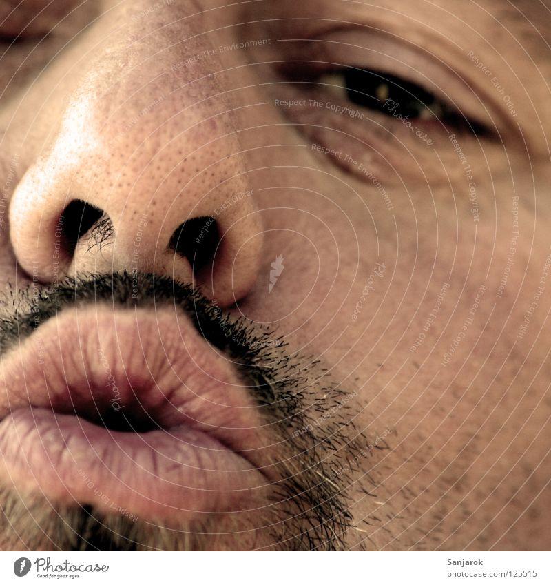 Nasenbär Mann alt Gesicht Auge sprechen Mund süß Lippen nah Küssen Bart Wange schwarzhaarig singen Vollbart