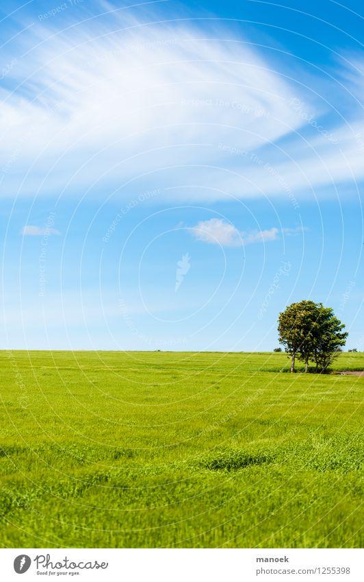 Weites Feld Natur Landschaft Wolken Sommer Schönes Wetter Wärme Baum frei Unendlichkeit Sauberkeit blau grün Freiheit Dänemark Jütland Weizen Horizont reduziert