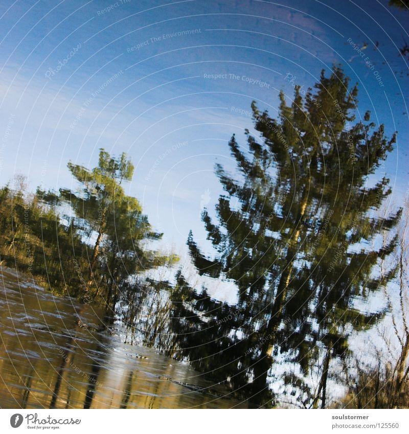 tannensee Himmel Wasser blau Baum Winter kalt Frühling See braun Eis nass Ast Spiegel Quadrat Tanne Ekel