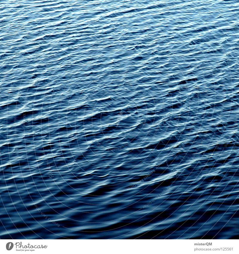 splish splash blau Wasser schön Meer Einsamkeit ruhig Erholung Leben kalt Spielen Bewegung See Luft Vogel Wind Wellen