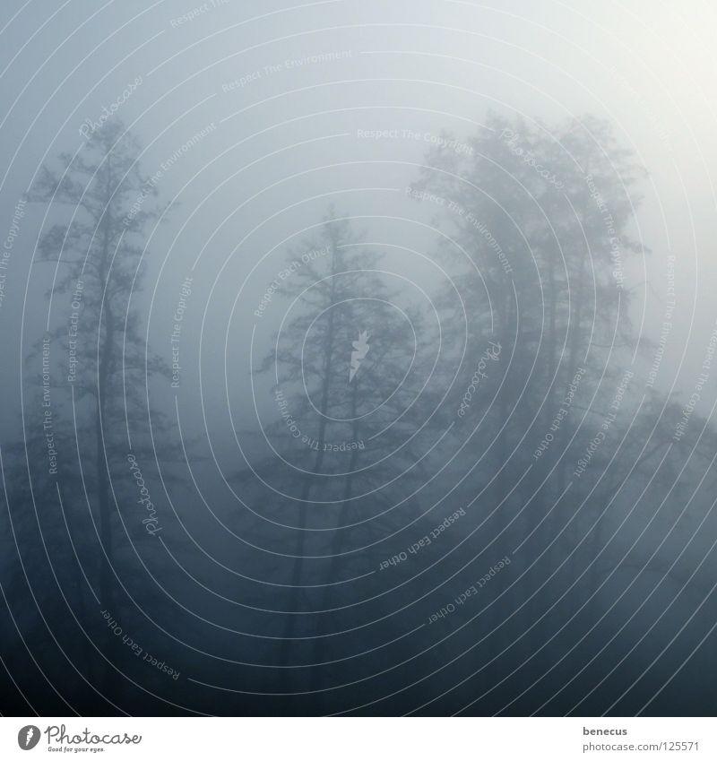 kein Durchblick Himmel Baum blau Wald dunkel grau Beleuchtung Nebel Hoffnung leicht unklar trüb Schleier ungewiss diffus
