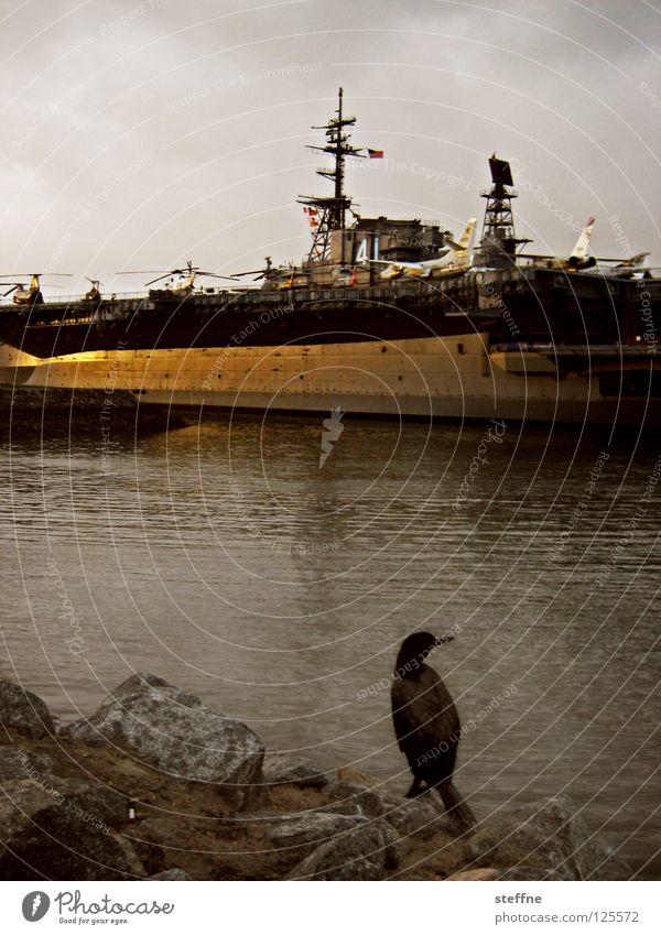 Natur und Technik Wasser Meer ruhig See Vogel Wasserfahrzeug Flugzeug Feder Technik & Technologie USA Hafen Bucht Denkmal Schifffahrt Krieg