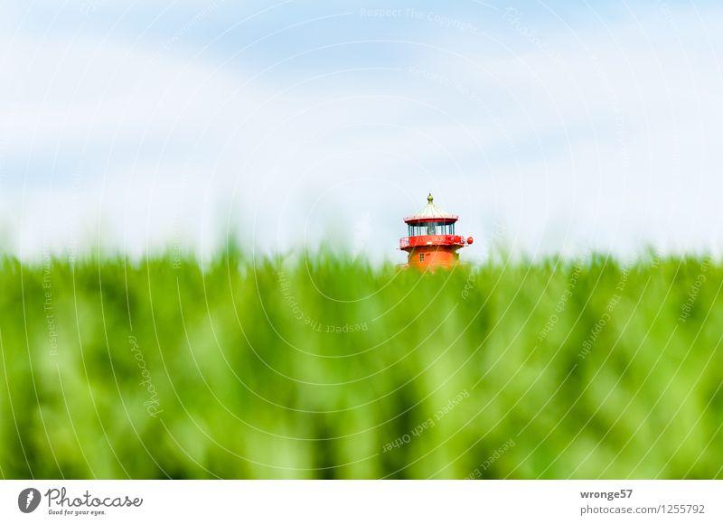 Küstenpilz Landschaft Himmel Horizont Sommer Nutzpflanze Getreidefeld Feld Deutschland Mecklenburg-Vorpommern Europa Turm Leuchtturm Dach Sehenswürdigkeit