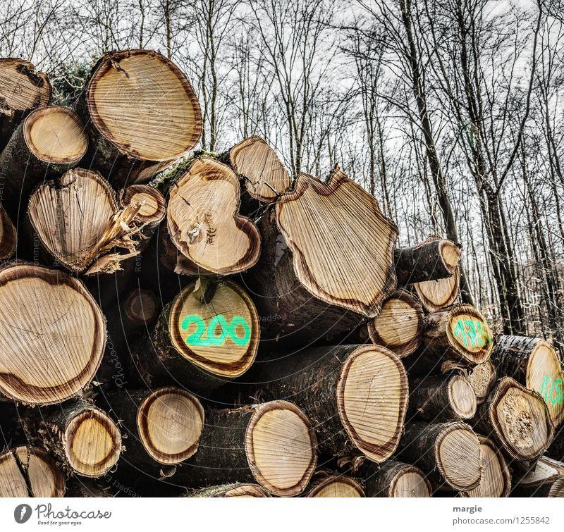 Im Wald ein Stapel Baumstämme mit der Zahl 200 Handwerker Waldarbeiter Förster Holzwirtschaft Erneuerbare Energie Forstwirtschaft Landwirtschaft Industrie