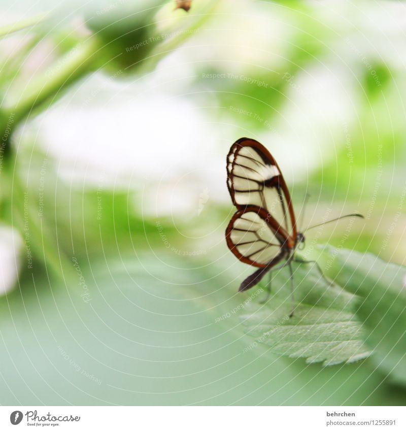 selbst der kleinste... Natur Pflanze Tier Frühling Sommer Baum Blatt Garten Park Wiese Wildtier Schmetterling Flügel glasflügelfalter 1 Erholung fliegen sitzen