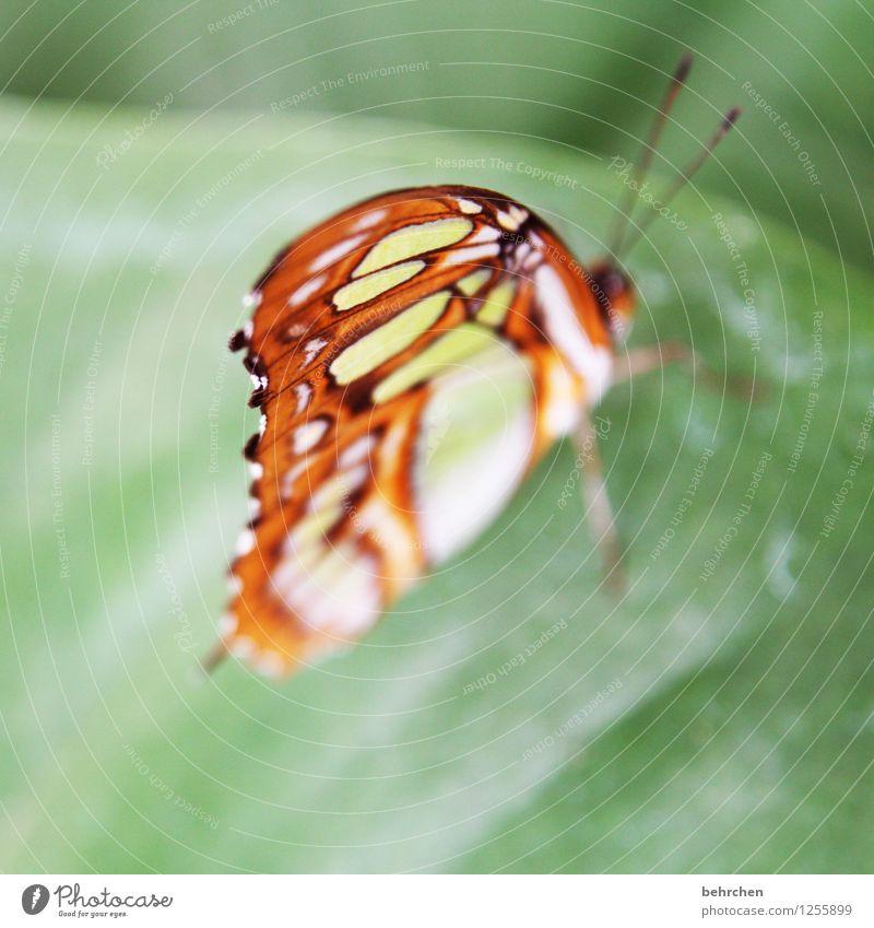 von oben herab Natur Pflanze Tier Frühling Sommer Schönes Wetter Baum Blatt Garten Park Wiese Wildtier Schmetterling Flügel 1 beobachten Erholung fliegen