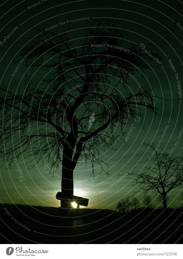 Grün ist die Hoffnung .... Baum Blatt Wolken Blüte Stimmung Wetter Ausflug Spaziergang Bank Ruhestand Blattknospe Sauerstoff Blattgrün aufstehen Photosynthese Obstbaum