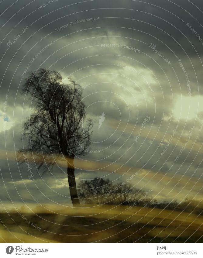 Wetter, Wetter, Wetter... Natur Himmel Baum Pflanze Wolken Gras Regen Feld Wind nass Horizont Wachstum Bodenbelag Ast Sturm