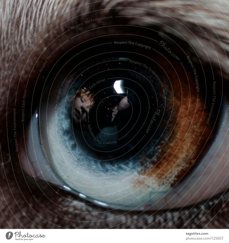 THE I INSIDE Hund Mensch blau weiß Tier schwarz Auge träumen braun Instant-Messaging Klarheit Vertrauen Spiegel Fleck Fragen mystisch