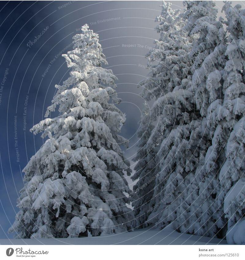 tiefgefroren Winter Kleid Wald Baum kalt Klirren weiß Eis Schnee Winterkleid Himmel Frost Lanschaft Ast Zweig blau Alpen