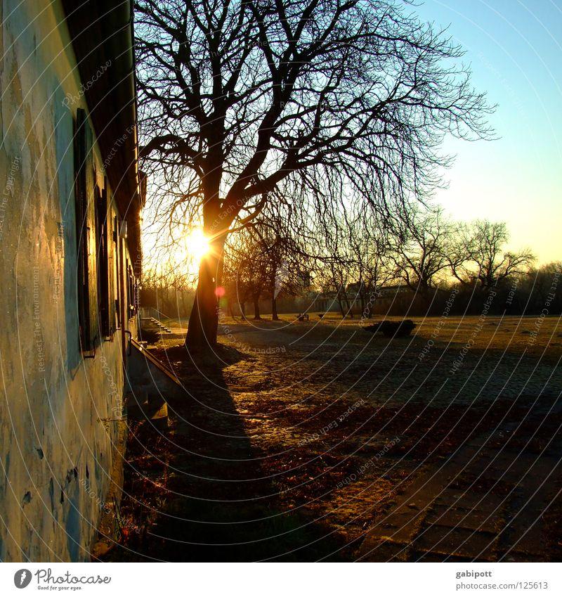 Bullerbü-Romantik Baum Sonne Sommer Einsamkeit Haus ruhig Wiese frei Vergänglichkeit Idylle einfach verfallen Bauernhof historisch Vergangenheit