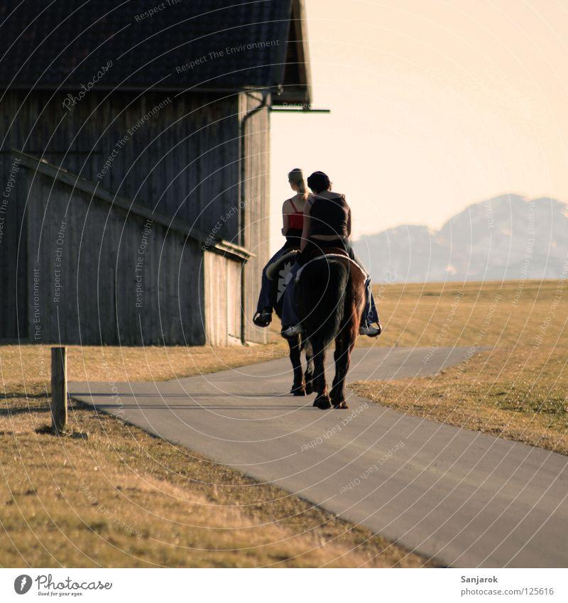Lucky Luke & Freund Himmel Freude Straße Sport Gras Berge u. Gebirge Sonnenuntergang Wege & Pfade Wärme Freundschaft Beine Zufriedenheit Rücken Pferd Frieden
