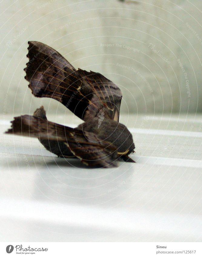 Fell Boing 747 weiß Sommer Tier grau braun fliegen schlafen Luftverkehr Pause Frieden Flügel Insekt Schmetterling Sonnenbad Flugzeuglandung