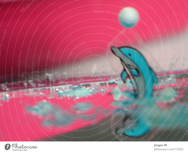 man ruft nur Flipper ... Delphine rot Dinge Ball Wasser dolphin red water
