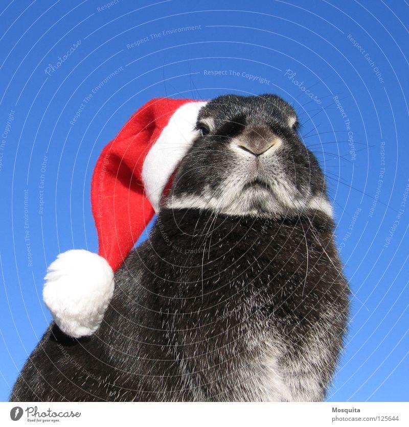 Osterhase Tier Weihnachten & Advent Himmel weiß blau rot schwarz Nagetiere kalt Feste & Feiern Ostern Weihnachtsmann Karneval Mütze böse