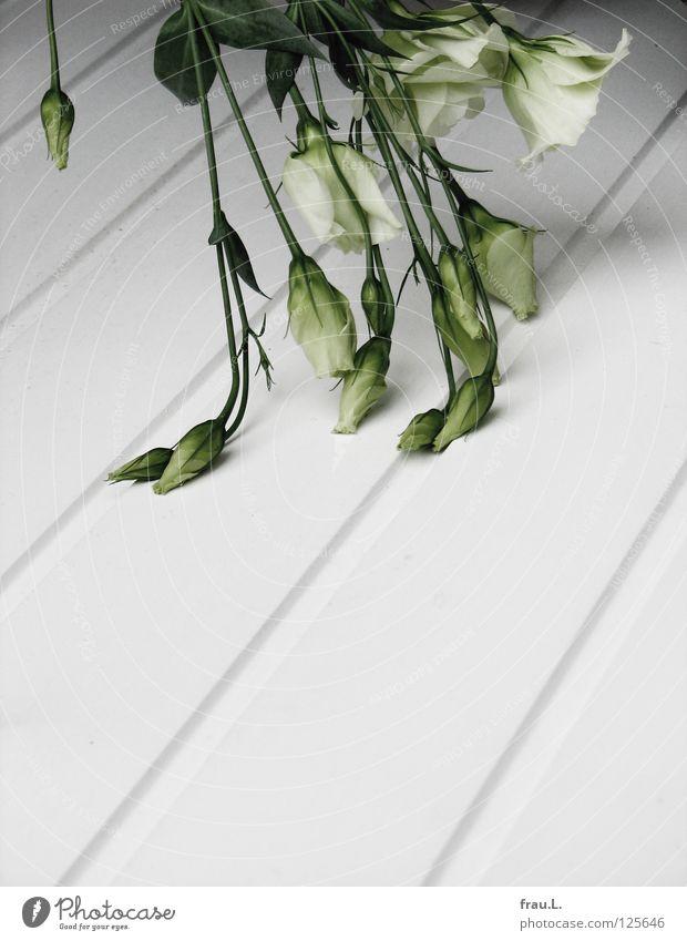 geknickt Blume Blumenstrauß weiß grün Sommer Lysianthos zart Holz Holzbrett kaputt kalt hängen unterkühlt Beerdigung Trauer Dekoration & Verzierung Verzweiflung