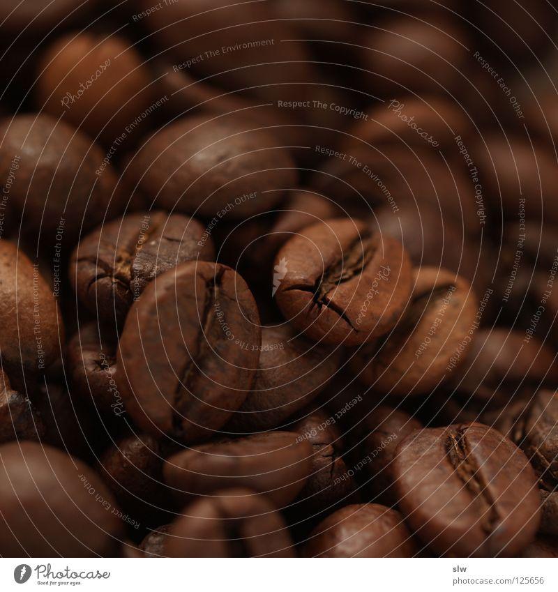 Kaffeebohnen Koffein Brasilien Makroaufnahme Nahaufnahme Bergkaffee Arabica Robusta Stein kaffeegenuss genießen Trinkkultur