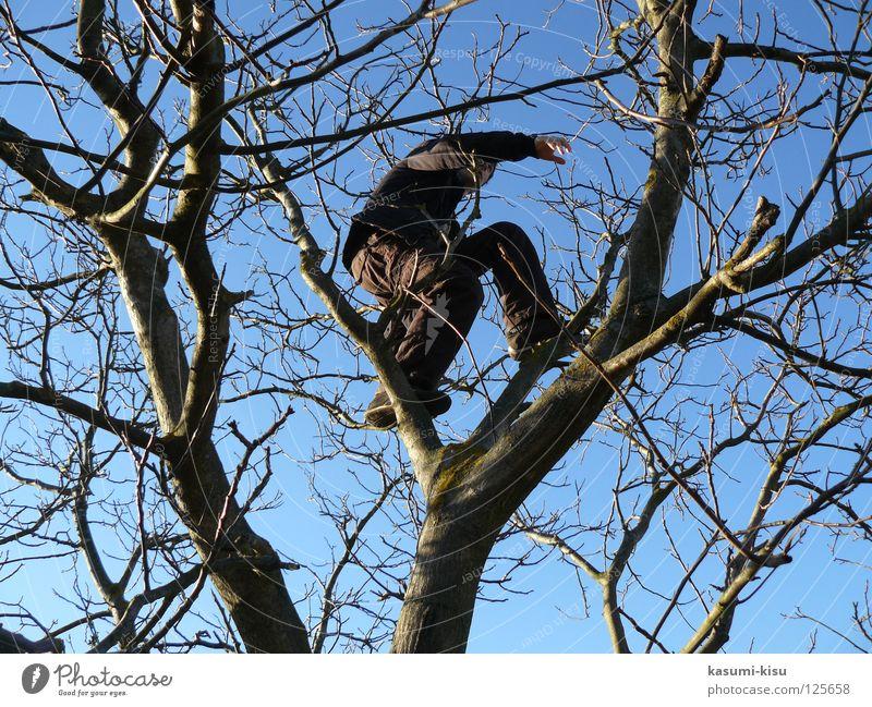 hoch hinaus! Mann Himmel Baum Freude Winter verrückt gefährlich bedrohlich Freizeit & Hobby Klettern Ast