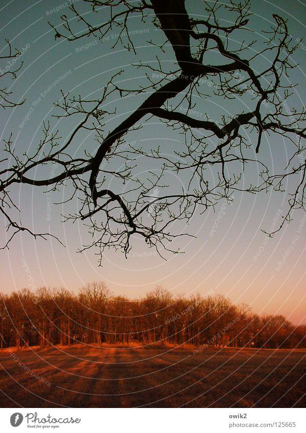 Verdunklungsgefahr Natur Baum Wald Horizont Spaziergang Ast Zweig Abenddämmerung