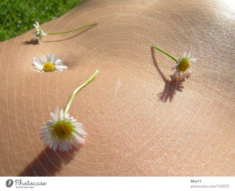 Blumenbauch Frau schön Sommer Freude ruhig Erholung Bauch Gänseblümchen Wiesenblume