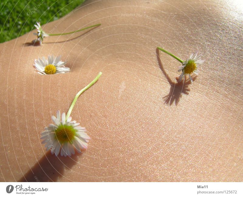 Blumenbauch Gänseblümchen schön Sommer Erholung ruhig Außenaufnahme Frau Freude Makroaufnahme Nahaufnahme Bauch