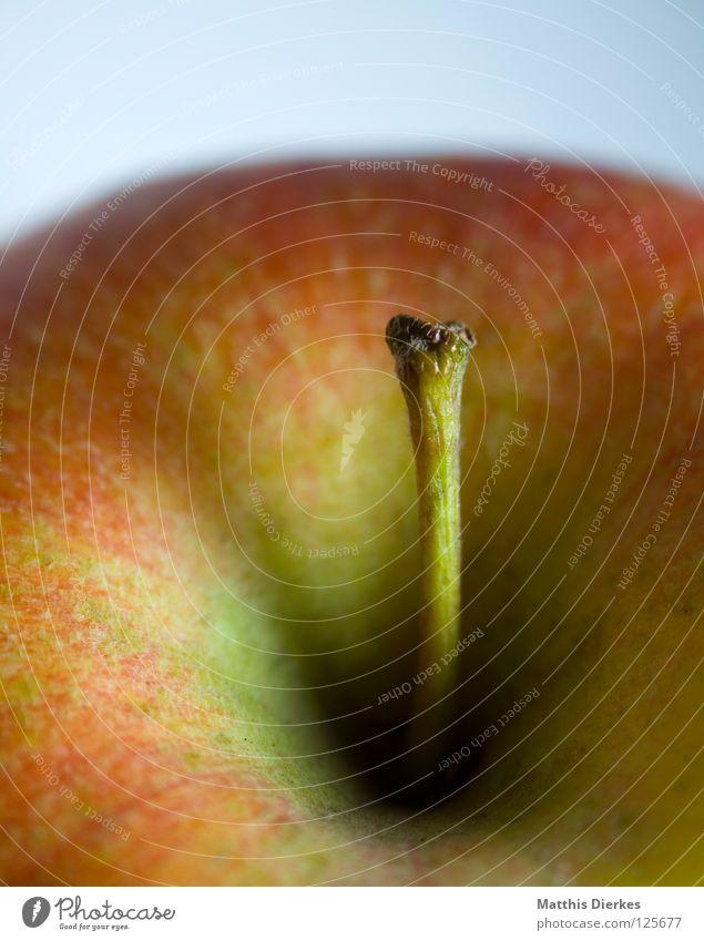 Apfel rot Sommer Farbe Ernährung Herbst Gesundheit Frucht Energiewirtschaft Haut süß rund Schnur Dinge Ball Gemüse