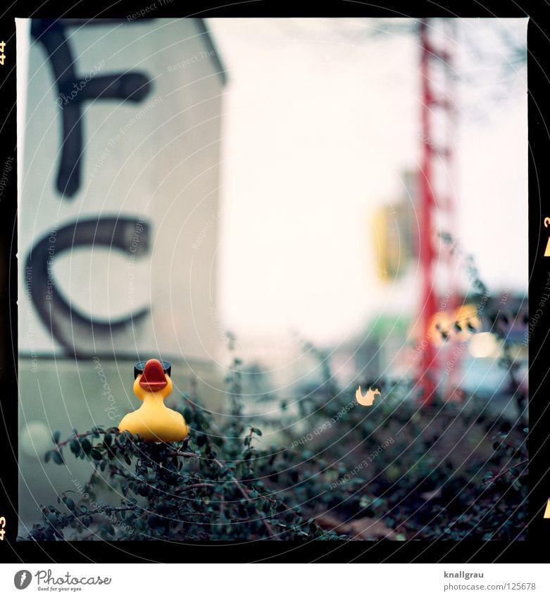 FC-Ente Freude gelb Graffiti Ausflug Coolness Buchstaben Schwimmen & Baden Spielzeug Kindheit Ente Hannover Beet Mittelformat Ausgelassenheit Badeente Stadtleben