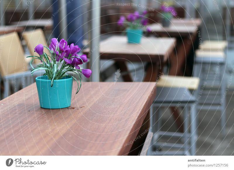 Touri-Meile Ferien & Urlaub & Reisen Sommer Freude Essen Lifestyle Feste & Feiern braun Deutschland Tourismus Dekoration & Verzierung Tisch Ausflug Stuhl violett Möbel Veranstaltung